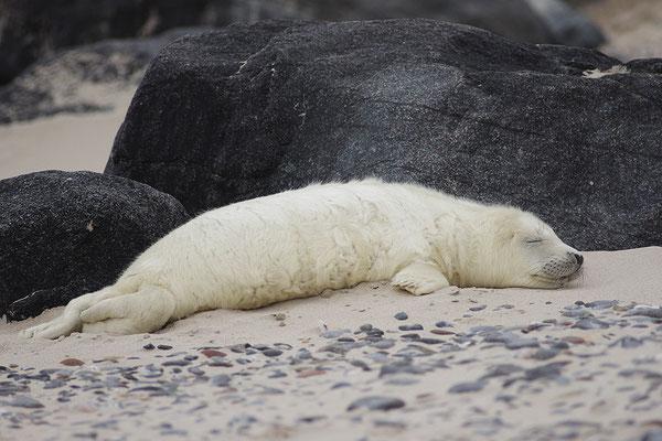 Jungtier beim Schlafen