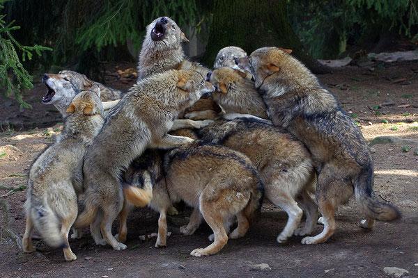 Wolf Rudel
