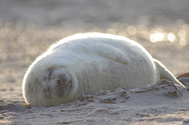 Jungtier im Gegenlicht beim Schlafen