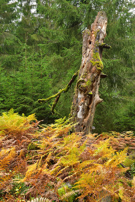 Urwald Nationalpark Eifel