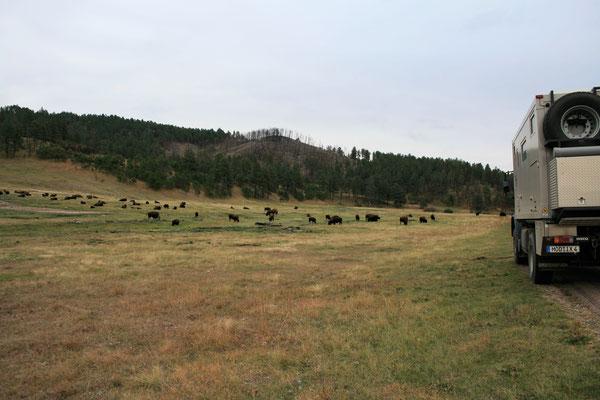im Custer State Park