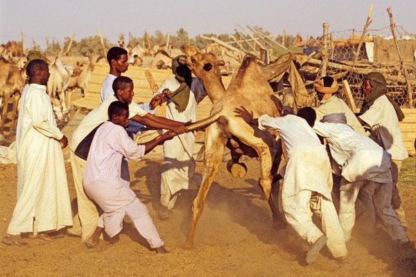 Kamelmarkt in Libyen | Foto © Lutz Jäkel