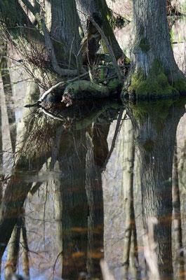 Waldsee 1