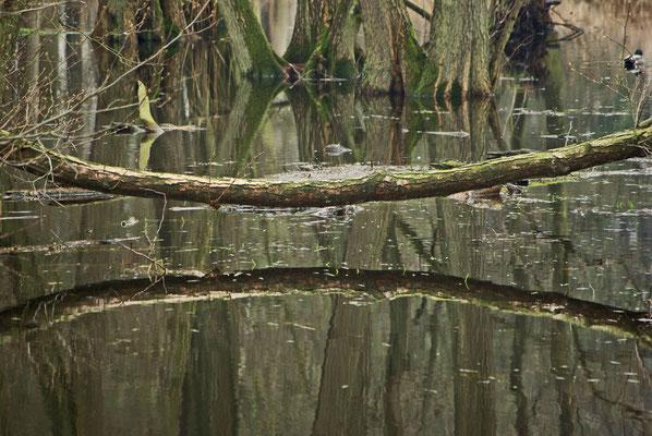 Waldsee 2