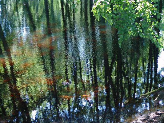 Spiegelung am Waldsee
