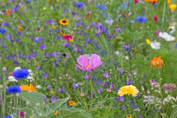 Sommerblumen_1