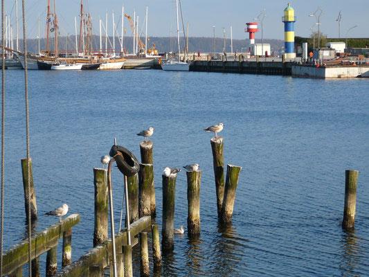 Eckernförde, Hafen