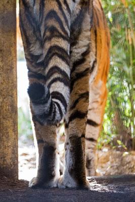 Tigerabgang
