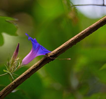 Schönheit im Unterholz