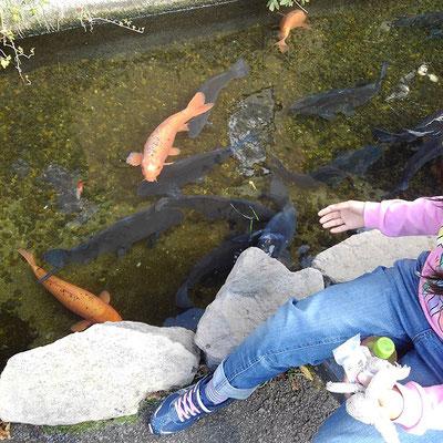 ベンチ前の溝には鯉が!エサもあげられますよ。