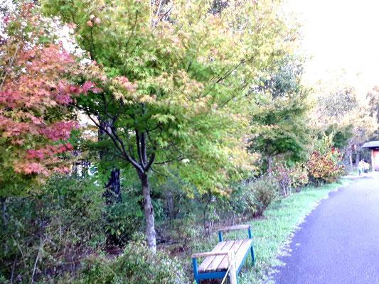 園内はちらほら紅葉が始まっています。しばらくしたら見頃かも。