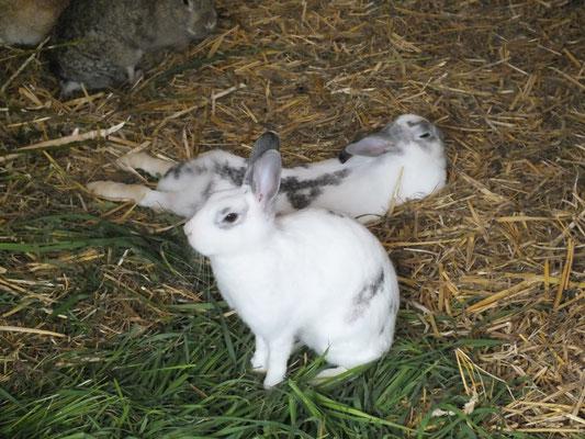 Gemütliches Kaninchenleben