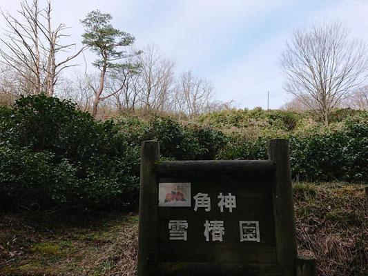 200330角神雪椿園001