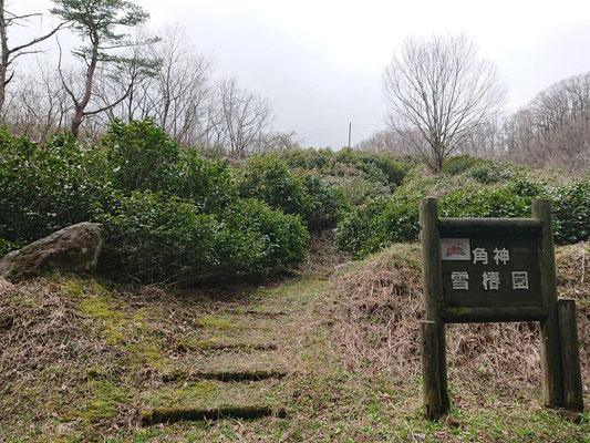 200328角神雪椿園001