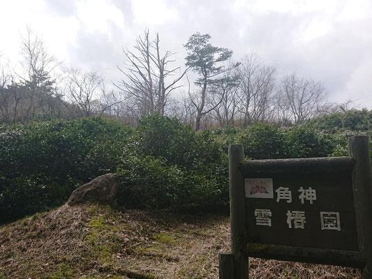 20200312角神雪椿園001