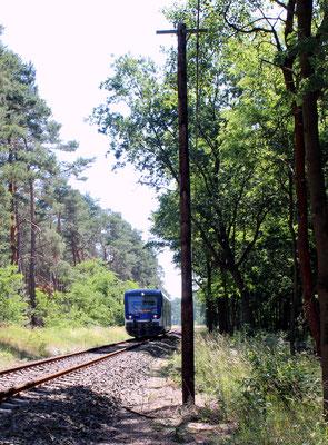 VT 010 zwischen Friedersdorf und Kablow, 23.06.2016