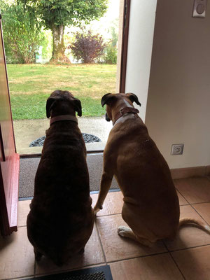 Margotte et Luciole regardent la pluie tomber