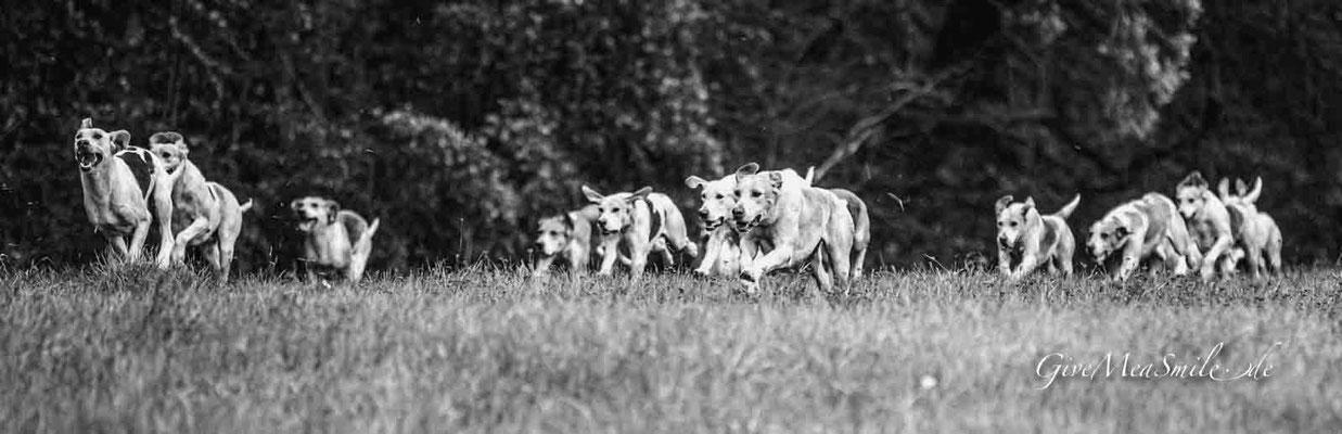 Schleppjagd Jagdfotos vom Team @Givemeasmile.de auf der Fotojagd, Peter Jäger   #givemeasmilede  Schleppjagd 2019 Ronneburg