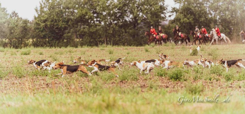 Jagdfotos vom Team @Givemeasmile.de auf der Fotojagd, Peter Jaeger , Schleppjagd Hörstel, Hof Rohlmann, Beagle Meute Münsterland   #givemeasmilede  #hammerjagd