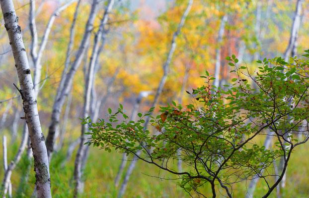 Herbstfarben, Acadia NP Maine
