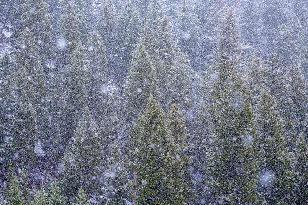 Schneegestöber in den Bergen Wyomings