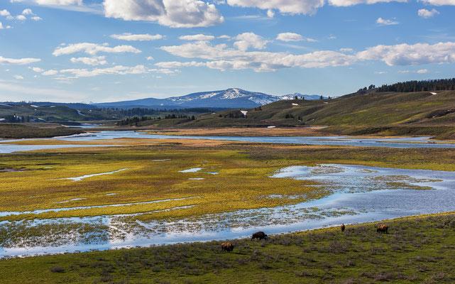 Das wunderschöne Hayden Valley im Yellowstone National Park, Wyoming