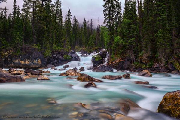 Yoho River trifft auf Kicking Horse River - Yoho NP, Kanada