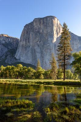 El Capitan im Morgenlicht - Yosemite NP, Kalifornien