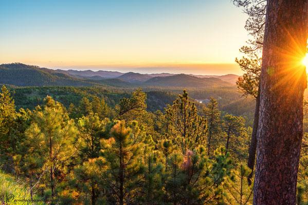 Sonnenaufgang im Custer State Park - Black Hills, South Dakota