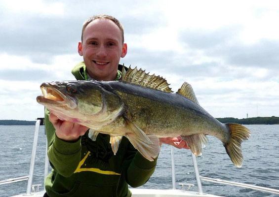 Pelagischer Zander nach 5 Minuten angeln