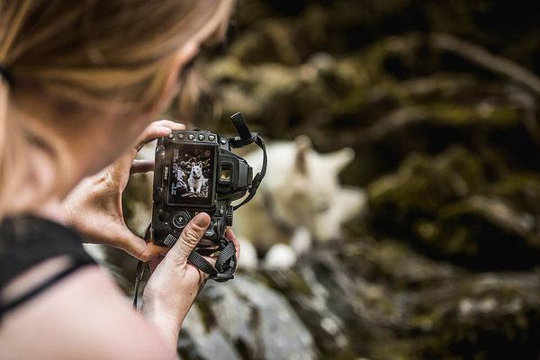 Coaching von Monkeyjolie zur Manuelle Fotografie für authentische Hundefotos