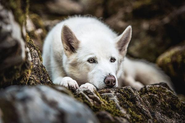Husky beim Fotografie Coaching von Monkeyjolie
