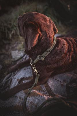 Labrador Retriever mit einer Retriever Leine von Isartau fotografiert auf einer Ethno Decke von der Hundefotografin Monkeyjolie