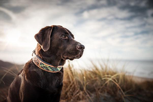 Perlenbesetztes Hunde Halsband von Woodsdogadventure , Labrador im Sonnenuntergang am Strand in den Dünen fotografiert von Monkeyjolie
