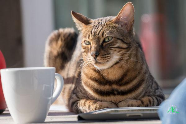Flashy braucht dringen noch einen Kaffee :: aufgenommen mit Sony Alpha 77 MK2 & Tamron 2,8/70-200mm USD, f/4,5