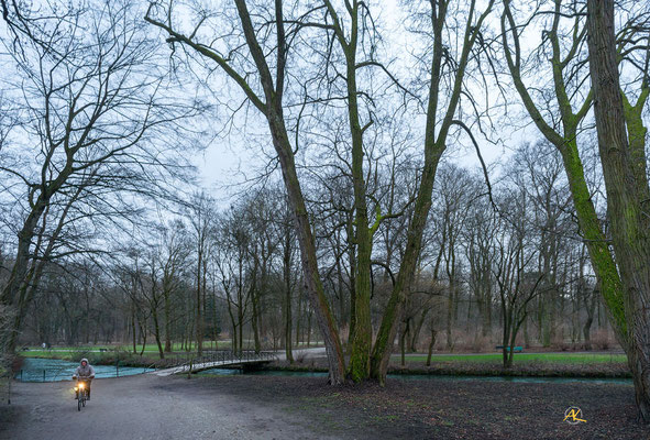 'Baumgiganten im Englischen Garten'