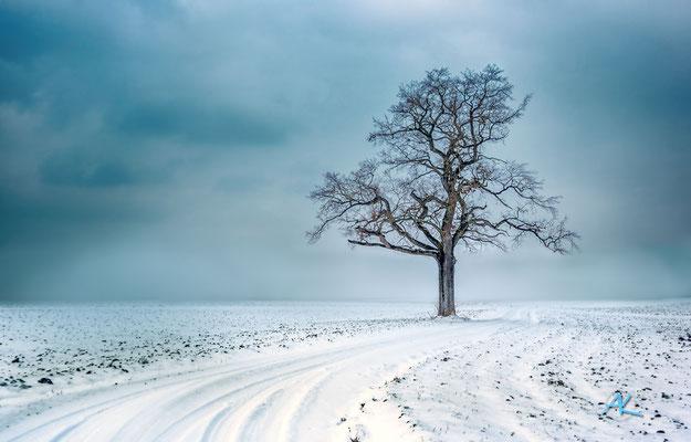 'Eiche im verschneiten Feld' Oberpframmern