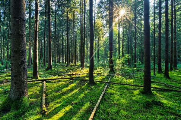 'Im Perlacher Forst'