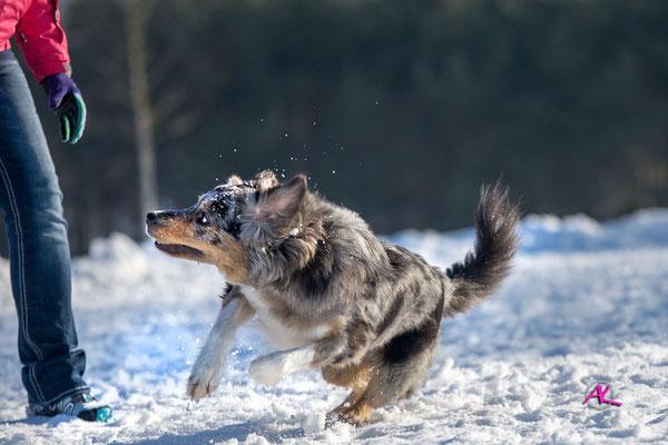 Jamie im Schnee - Nikon D3 & Sigma 4/100-300mm