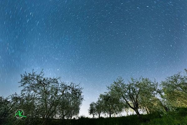 'Sterne über Olivenhain' Val D'Orcia, Toscana