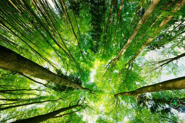 'Im Wald nach oben geschaut'