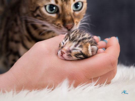 Emma passt natürlich ganz genau auf, wenn ihre Babies gewogen, kontrolliert oder fotografiert werden :)