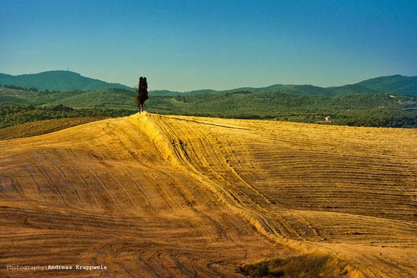 'Zypresse auf Hügel' Crete Senesi