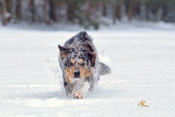 Jamie im Schnee - Sony Alpha 58 & Tamron 2,8/70-200mm USD