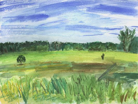 Weide bei der Petersdorfer Siedlung, Uckermark, Aquarell + Aquarellstifte, 32 cm x 24 cm, 4.8.2017