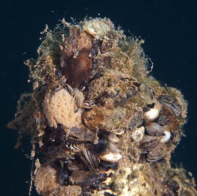 Baumstamm mit Schwamm und Muscheln bewachsen