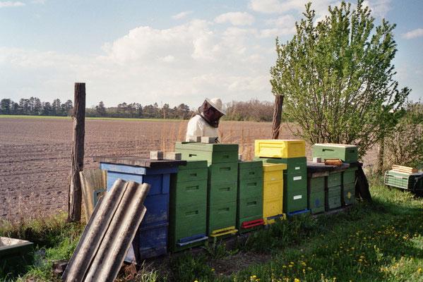 Bei der Bienenarbeit