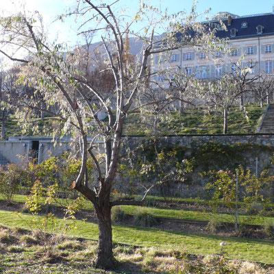 Domaine de Charance, jardin remarquable, terrasses, château, Gap, Hautes Alpes