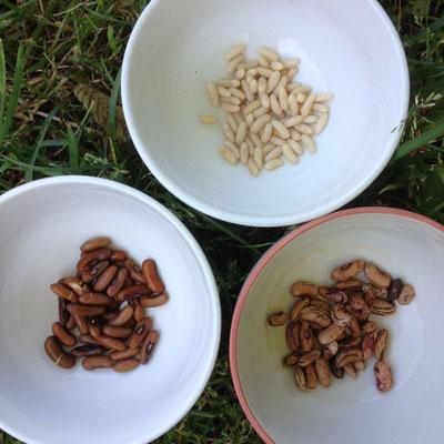 Potager, Kitchen Garden, Gap, Hautes Alpes, graines, haricots
