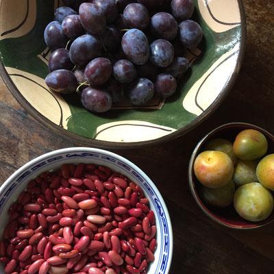 Potager, récolte, légumes, fruits, slow life, Gap, Hautes Alpes